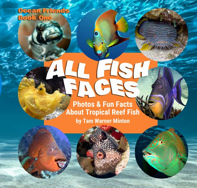 All Fish Faces